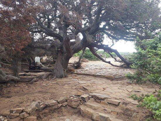 Torre dei Corsari, Italy: A pochi minuti di macchina c'è la Casa del Poeta, un albero secolare dalla storia magica