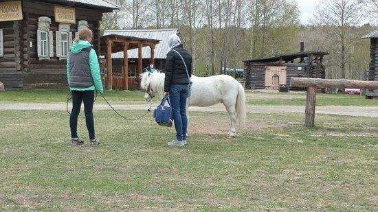 Taltsy, Rússia: pony for tourists