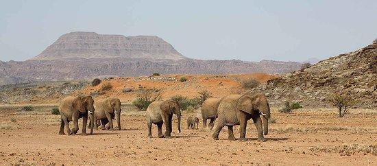 Namibia Holidays Tours & Safaris