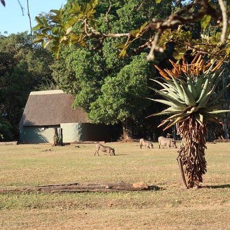 Mlilwane Wildlife Sanctuary, Eswatini (Swaziland): photo9.jpg