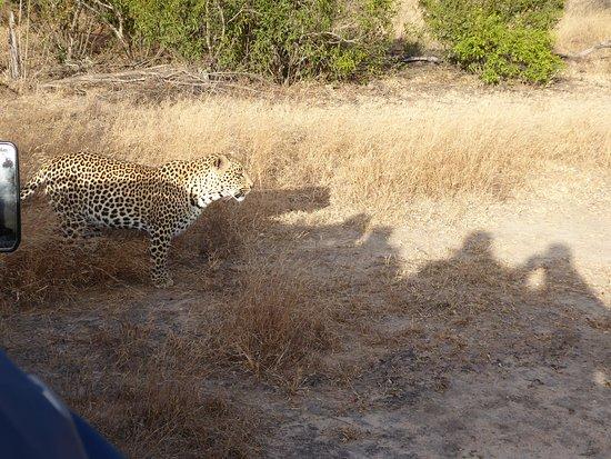 Skukuza, Afrika Selatan: Leopardo