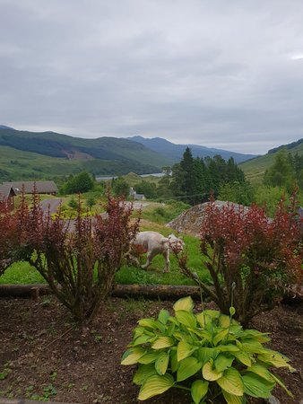 Crianlarich, UK: 20180714_181927_large.jpg
