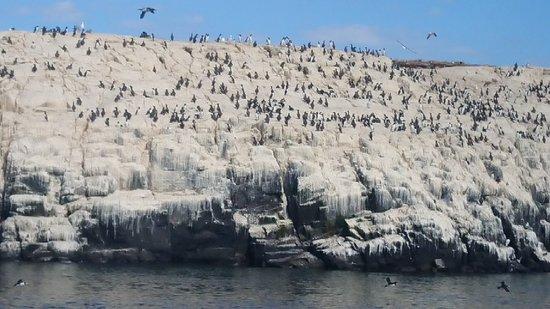 Farne Islands : DSC_0001_BURST20180714153624116_large.jpg