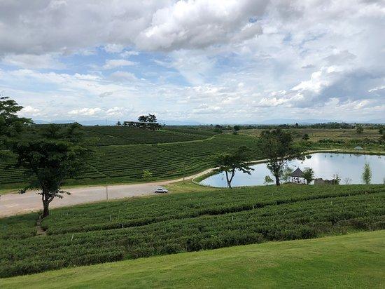 Mae Chan, Thailand: 屋上から見た茶畑