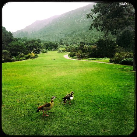 Kirstenbosch National Botanical Garden: photo7.jpg