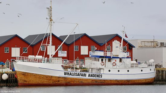 Whalesafari Andenes: Boat MS Reine at Andenes fishing port