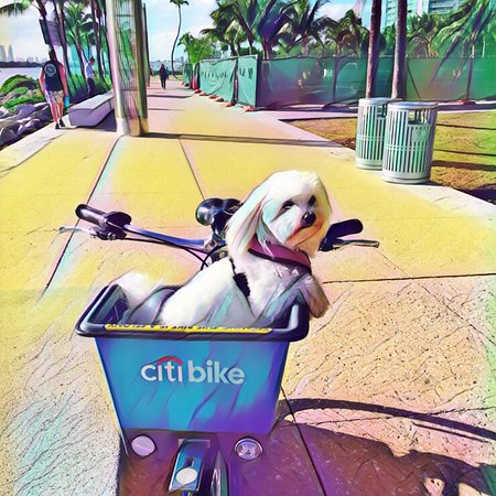 Citibike: photo0.jpg