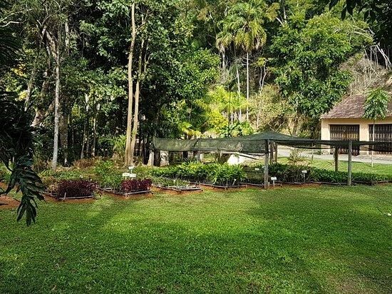 Horto Central Florestal Santos Lima