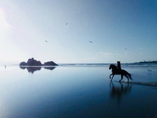 Cheval Essaouira