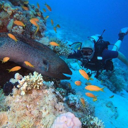 Ocean College Dive Centre Photo