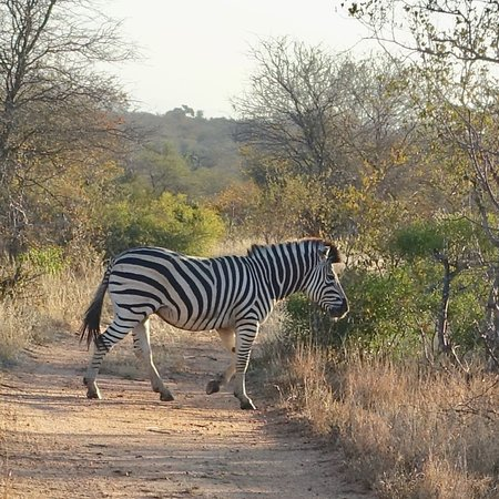 Klaserie Private Game Reserve, South Africa: photo5.jpg