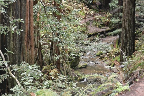 Muir Woods National Monument: Muir Woods