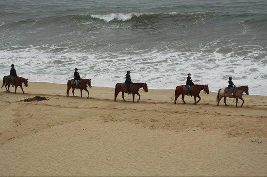 Sea Horse Ranch