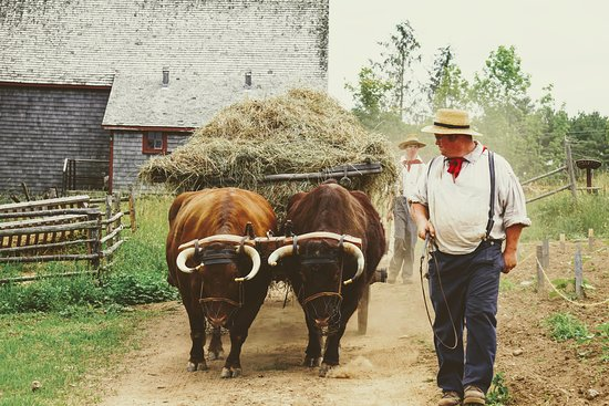 New Ross, Canada: At one time all hay was put in loose with the help of oxen and horses.