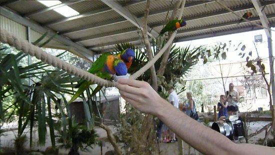 Twycross Zoo: Feeding the birds is a fun adventure!
