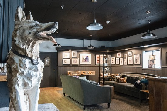 Museum of Dog