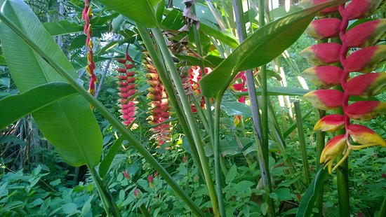 Hotel Tropika Davao: Beautiful gardens
