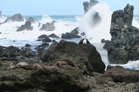 Wairarapa, Nowa Zelandia: Fighting seals
