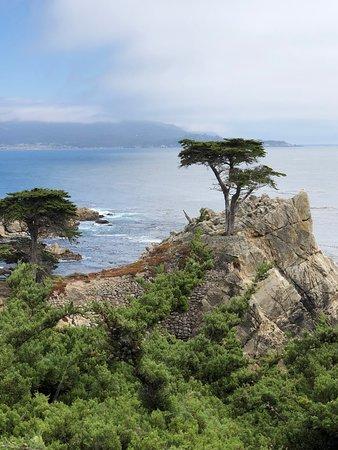 Gray Line San Francisco: The Lone Cypress