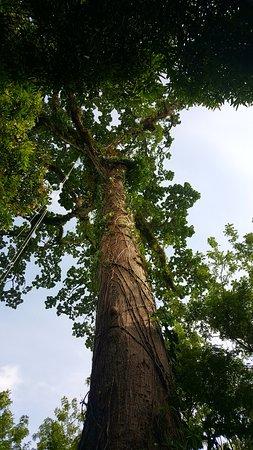 Cotton Tree Lodge Photo