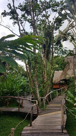 Cotton Tree Lodge: Walkway