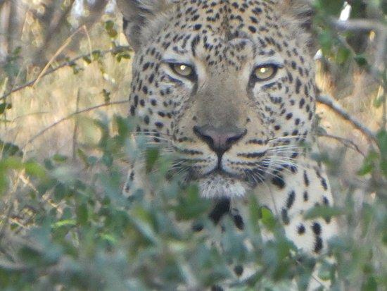 Mala Mala Private Game Reserve, แอฟริกาใต้: 1st hour of our 1st safari