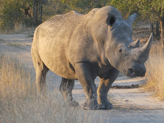 Mala Mala Private Game Reserve, แอฟริกาใต้: wow