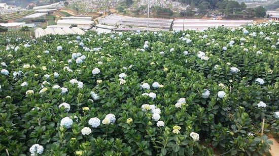 Ντα Λατ, Βιετνάμ: is a terrain garden