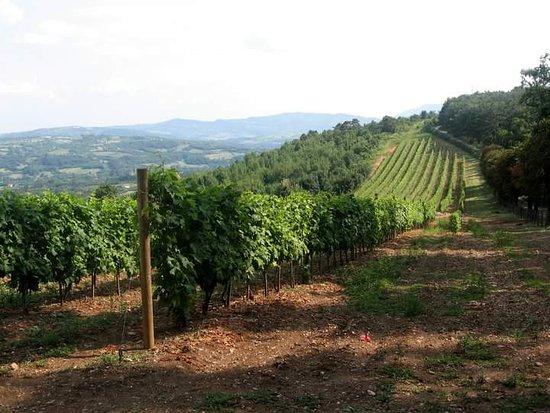 Topola, Srbija: Vinogradi