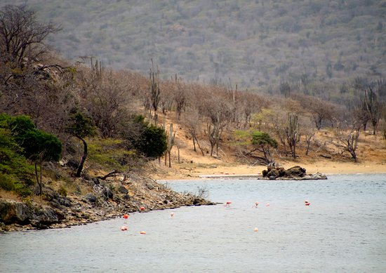 Lake Gotomeer : view of lake with flamingos and mountains