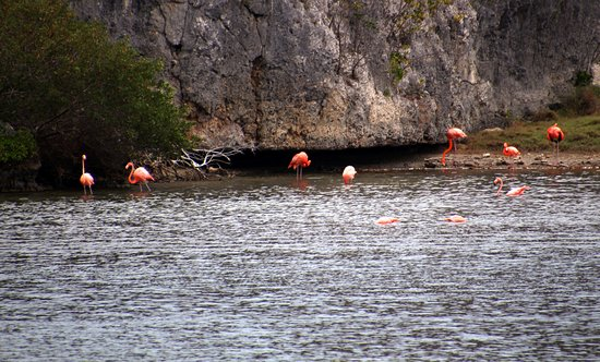 Lake Gotomeer : flamingos feeding