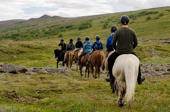 Husavik, Islandia: Family tour