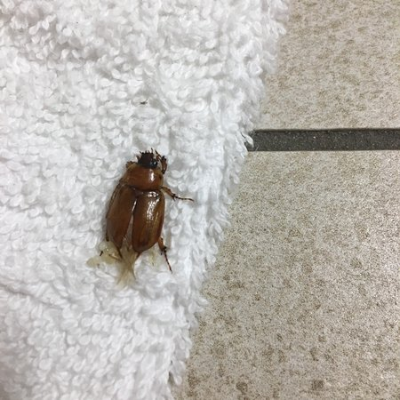 Flying cockroaches and an unprofessional front desk