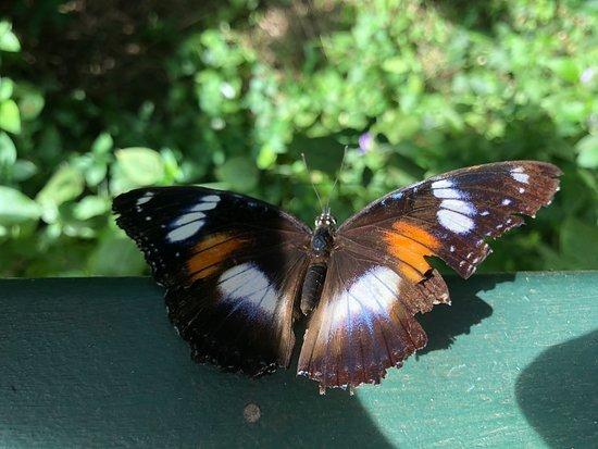 Batchelor Butterfly Farm and Pet Garden