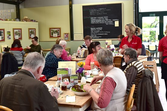Attleborough, UK: Our popular Tea Room and Restaurant is open everyday Monday to Sunday