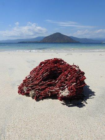 Alor Divers Eco Resort : corail rouge echoué