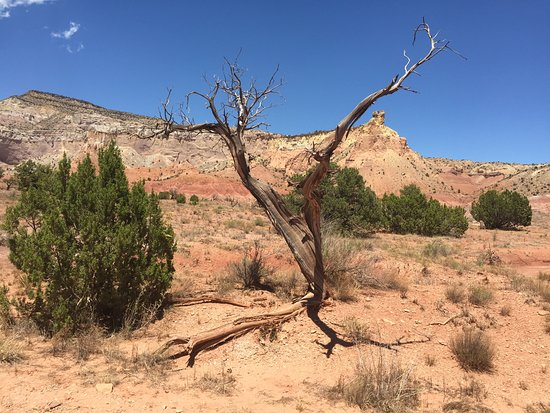 Ghost Ranch: Dead tree subject in O'Keefe's paintings