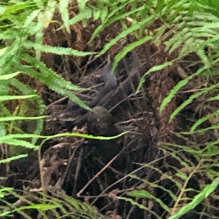 Corkscrew Swamp Sanctuary: Swamp animals