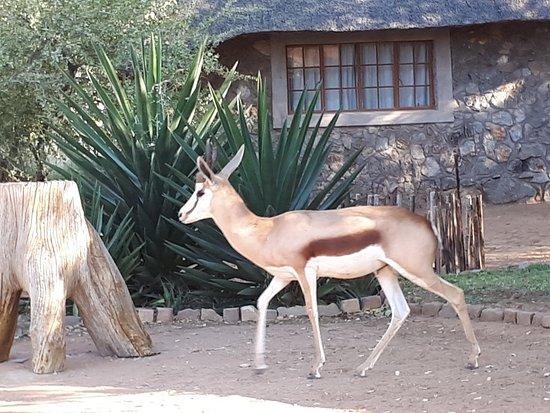Khorixas, Namibia: 20180712_164054_large.jpg