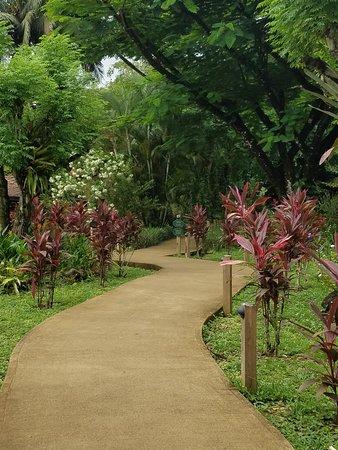 Sleeping Giant Rainforest Lodge: One of many gorgeous pathways around the property