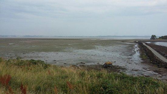 Island Hill & North Strangford Nature Reserve: Strangford Lough mud flats
