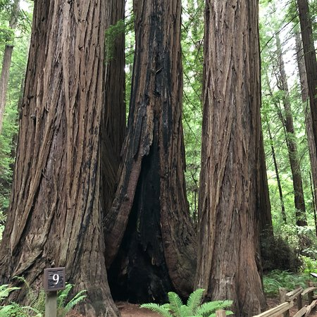 Muir Woods National Monument: photo1.jpg