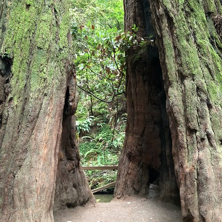 Muir Woods National Monument: photo3.jpg