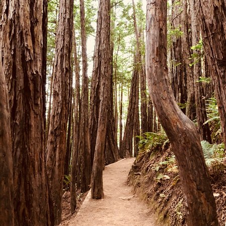Muir Woods National Monument: photo4.jpg