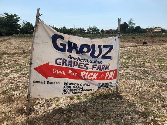 Gapuz Grapes Farm: Gapuz Farm