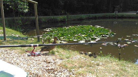Landford, UK: IMG_20180709_151302_large.jpg