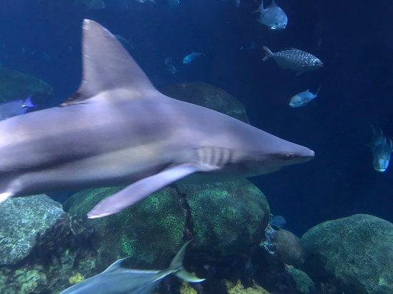 Tennessee Aquarium: Pic