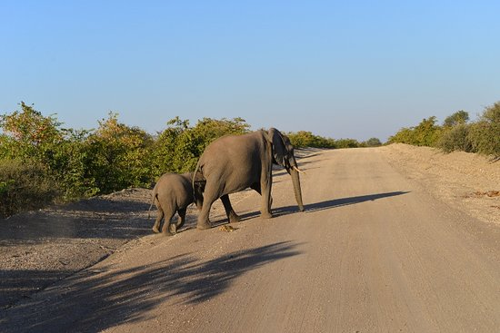Northern Tuli Game Reserve, Botswana: Elephants with kids have right of way