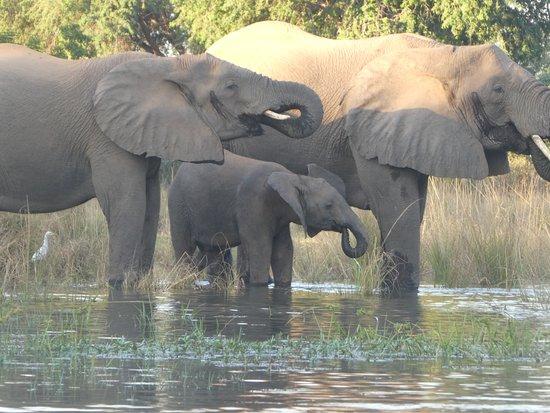 Lower Zambezi National Park, Zambia: wildlife on safari