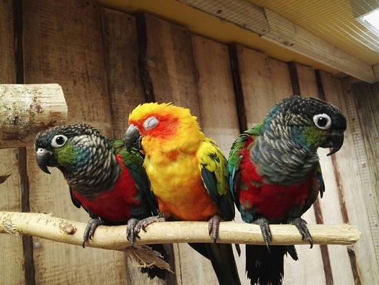 Papugarnia Lora